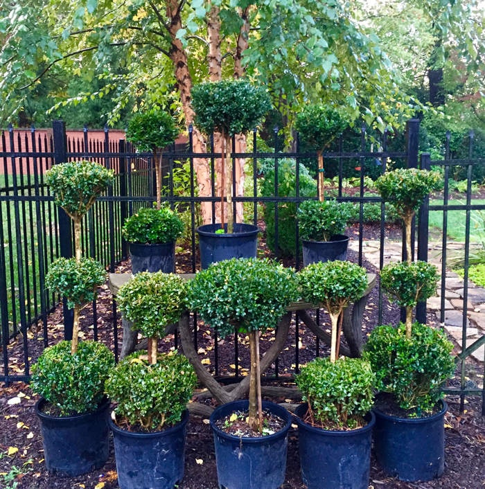 Nurseries-Topiary