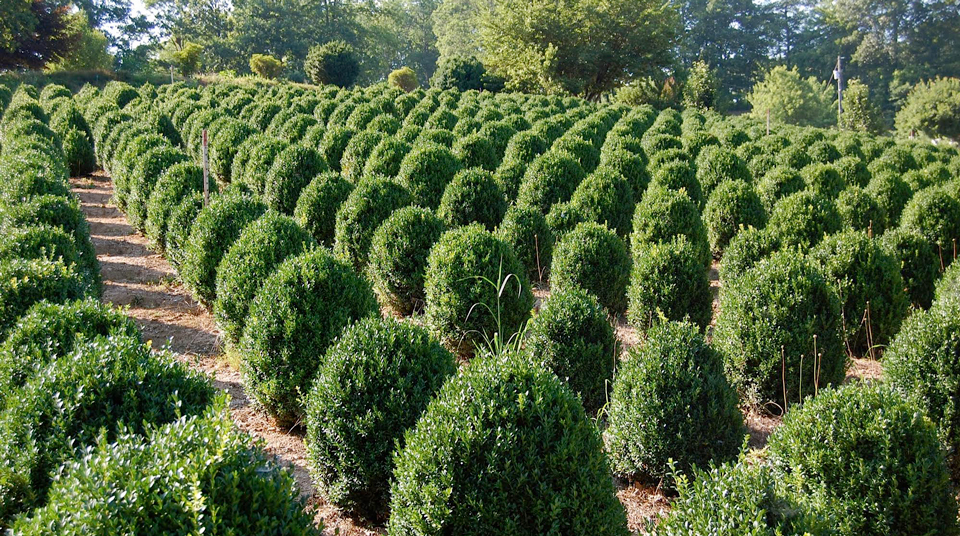 boxwood-farm-home