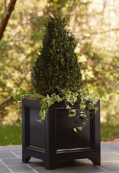 Container-Boxwood-Taper
