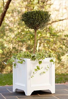 Container-Boxwood-Topiary
