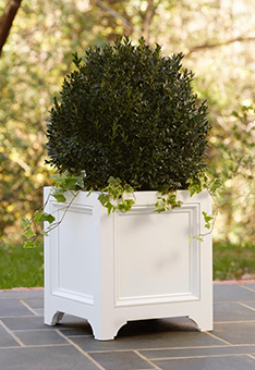 Container-Boxwood